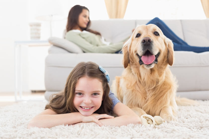 Building a home even your pets will love.