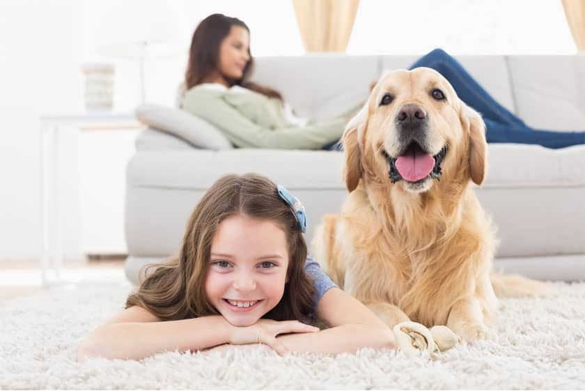 Best Carpets For Homes With Dogs